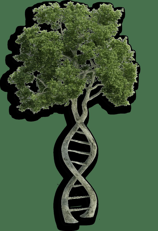 Árvore do DNA 8B arquitetura